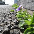Photos: 道端の春(1)