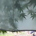 傘越しの青紅葉。