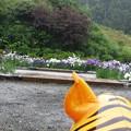 虎も観賞。