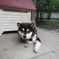写真: 瑠璃寺の犬