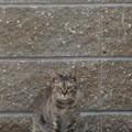 メンチ切る猫(2)