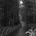 竹林の小径。