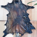 タヌキの皮。