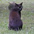 シュレディンガーの猫