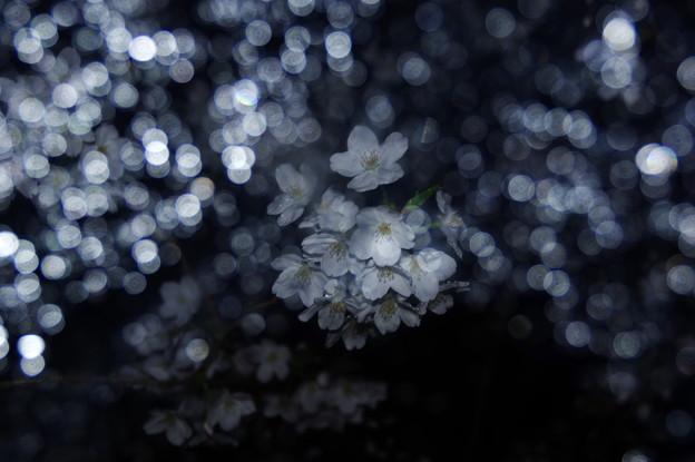 Photos: 零れる花