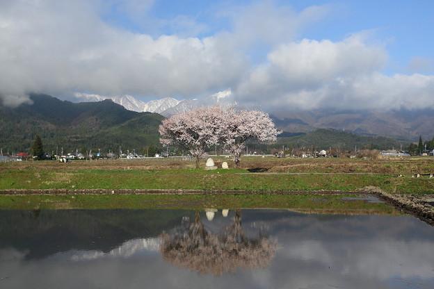 桜`13(道祖神と常念)-4