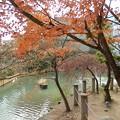 Photos: 生田神社の境内3