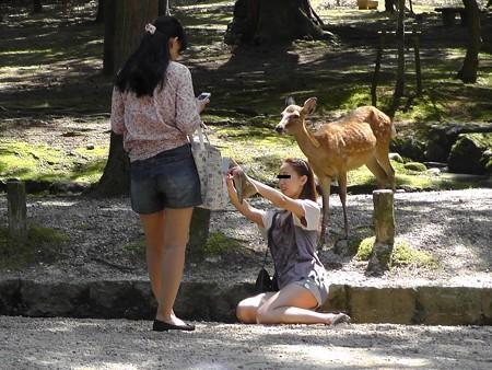 奈良公園22
