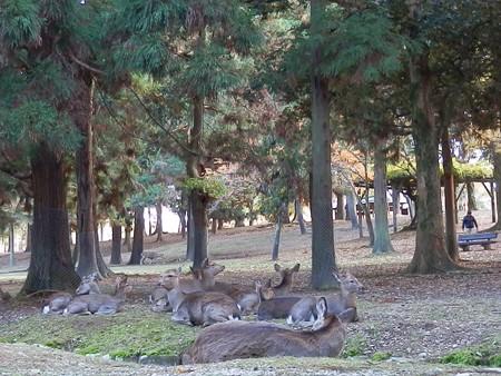 奈良公園24