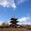 Photos: 法起寺冬支度