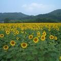Photos: 2012_0725_095133-CIMG6836