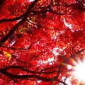 写真: 紅萌ゆる秋の一日
