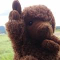 写真: きままに北海道の新入り羊だよ
