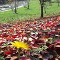 Photos: 往く秋を見つめて