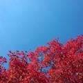 写真: 紅と蒼の記憶