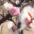 Photos: 春だ~っ