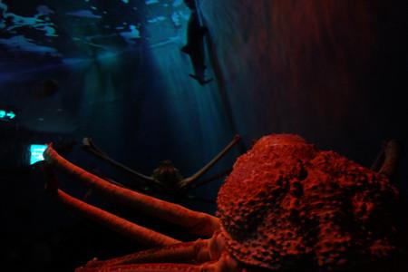 深海からの視線