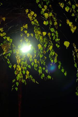 09_緑風