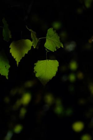 10_Green