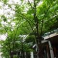 Photos: 東京国際フォーラム ちょっと広場で散歩・・20120722