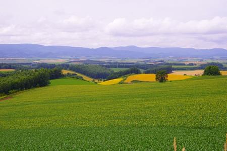 三愛の丘展望台から広い畑と十勝連峰・・