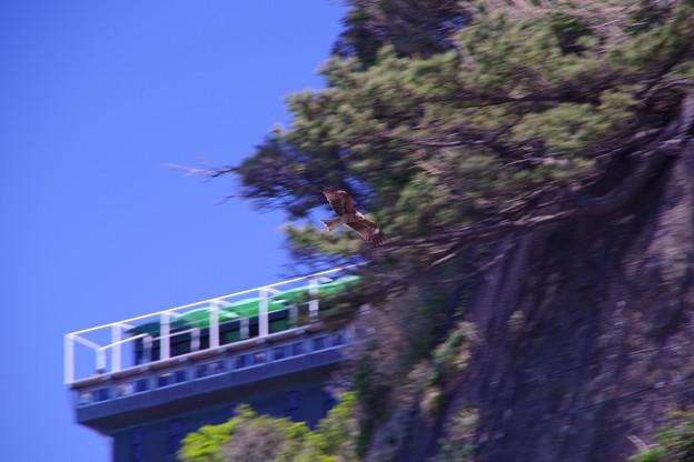 江ノ島の鳶も優雅に飛んで・・20130428