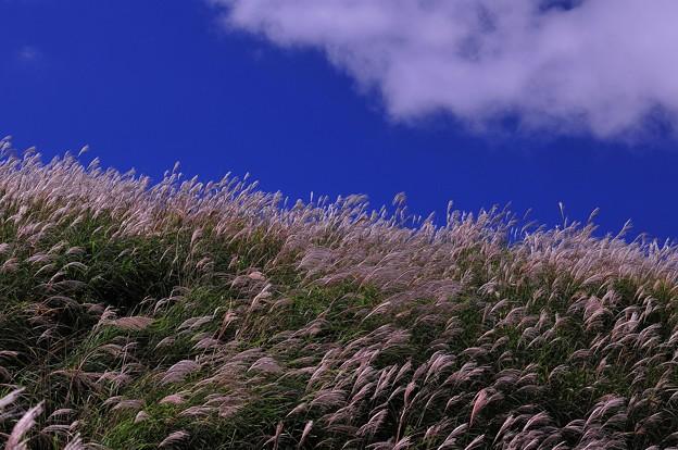 箱根の青空とススキ・・