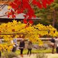 向かいから彼女たちは紅葉眺めて・・昭和記念公園20131109