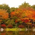 写真: 昭和記念公園の日本庭園 紅葉?・・20131109