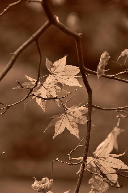 冬へのカウントダウン・・昭和記念公園20131109