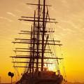Photos: 夕日にあたって。。綺麗なシルエット・・