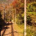 写真: 箱根の紅葉へ登山鉄道乗って。。。20131118