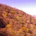 写真: 箱根ロープウェイから見る箱根の山の紅葉・・20131118