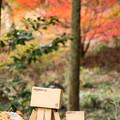 2012年鳥見山公園の紅葉-5