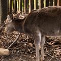 Photos: 春日大社の鹿・1