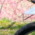 Photos: 2013月ヶ瀬梅ツーリング・5