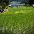 Photos: 奈良県宇陀市の棚田・4