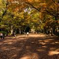 2013年・下鴨神社の紅葉-1