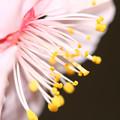3月3日 庭の花
