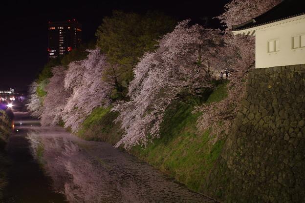 霞城公園の桜(2019年の桜)