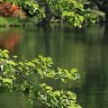 写真: 緑の輝き