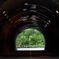 写真: 緑の木々 ~トンネルの先にあるもの~