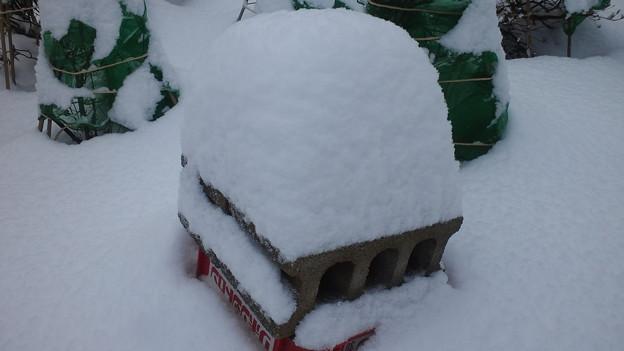 見事な雪・・・今季もか・・・