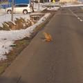 Photos: 道路はオイラのものだよ~