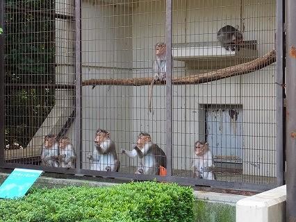 とべ動物園 ボンネットモンキー