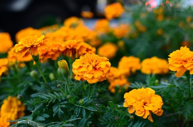 路傍の花 (4)
