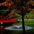 Tiny Piece of Autumn ~池~
