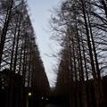 冬の散歩道~A Hazy Shade Of Winter~