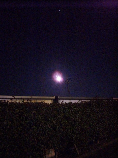 1月17日に鷲宮神社へ行きました・その9