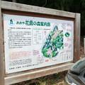 おおや花霞の森案内図